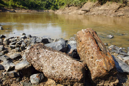 incursion: Petrified tree trunks beside the rio Manati near Iquitos, Peru (from the Pebas formation)