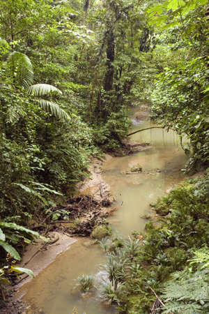 River running through tropical rainforest in Ecuador photo