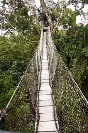 rope bridge: Canopy walkway strung between two rainforest trees in the Ecuadorian Amazon Stock Photo