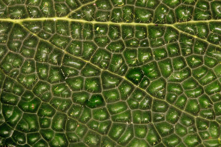 Close up of a leaf from rainforest in Ecuador photo