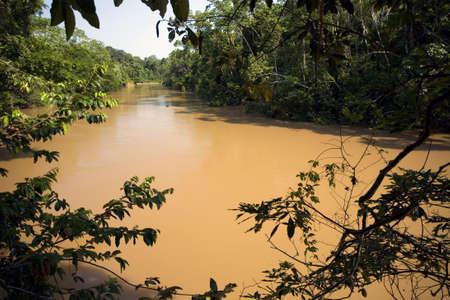 Amazonian river, the water brown with sediment, the rio Tiputini in Ecuador Stock Photo