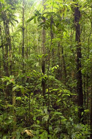 Interior of tropcal rainforest in Ecuador