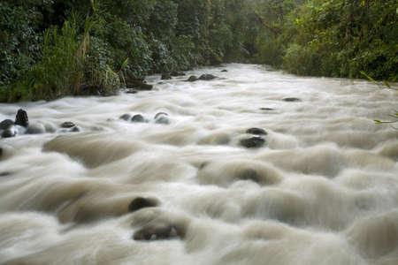 rio amazonas: Río que atraviesa el bosque nublado de Mindo en los Andes ecuatorianos