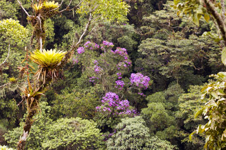 bromeliad: Cloudforest on the Amazonian slopes of the Andes in Ecuador