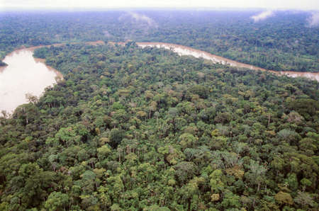amazon forest: Primary rainforest viewed from the air with the Rio Aguarico in the background, Ecuador