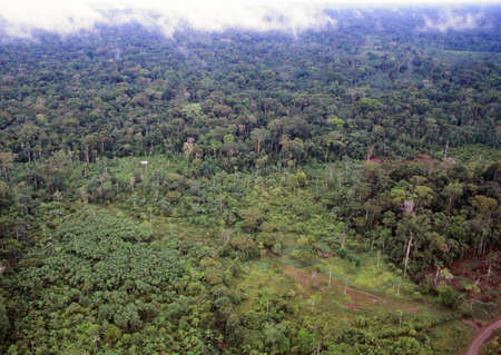Farmstead cut out of tropical rainforest in the Ecuadorian Amazon, part regrown with secondary forest and a muddy track where logs have been dragged to the road photo