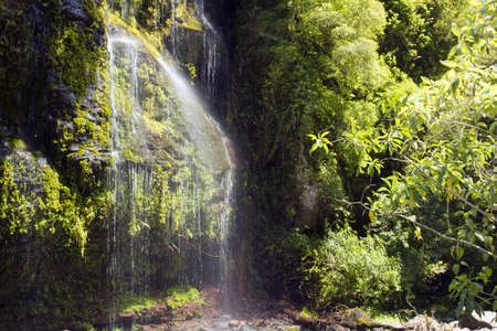 Cloudforest waterfall in the Rio Pita Valley in the Ecuadorian Andes photo
