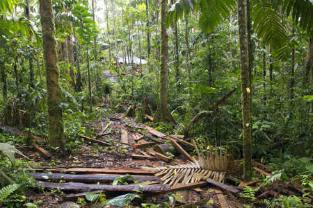 Debris left on the rainforest floor by timber traffickers who have cut a big tree and hauled out the planks