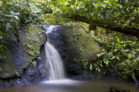 río amazonas: Pequeña cascada y el arroyo en el bosque húmedo tropical en la Amazonía ecuatoriana
