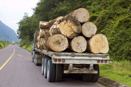 Trucking timber from the Amazon over the Andes in Ecuador photo
