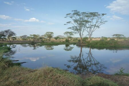 savana: MIRROR WATER