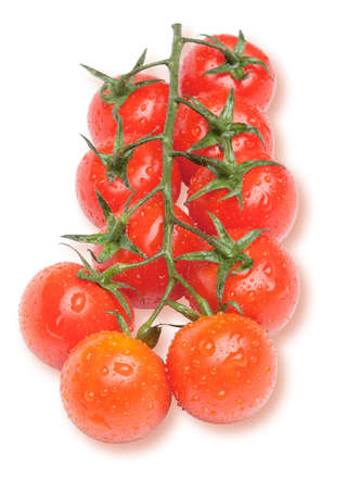 Ripe red cherry tomatoes on the branch with water drops. photo