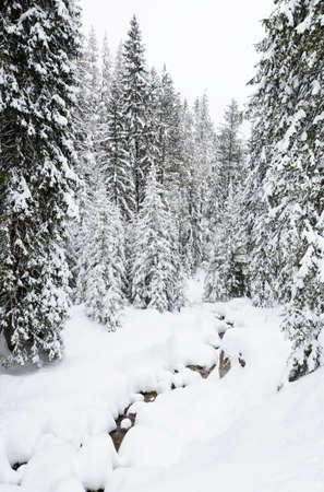 Winter forest in Bansko