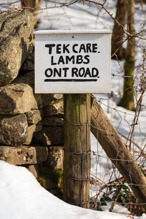 Tek Care Lambs Ont Road.  A sign written in a north of England dialect asking motorists to take care of new born lambs.