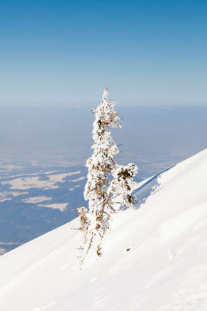 A small snow covered tree viewed from the summit of Untersberg mountain in Austria.  The mountain straddles the border between Germany and Austria.