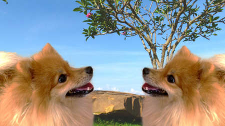 bowwow: Twin brown charming dogs
