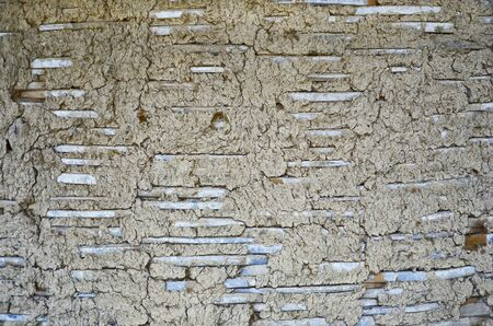 muck: Pattern of  bamboo woven and muck