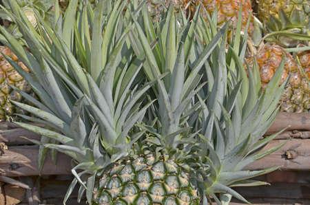 wonderfull: Wonderfull scion of a pineapple Stock Photo