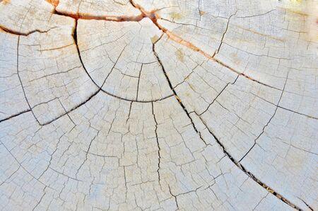 boom kappen: Mooi patroon van de boom snijden
