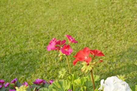 Beautiful red flowers with green background Stock Photo - 18182149