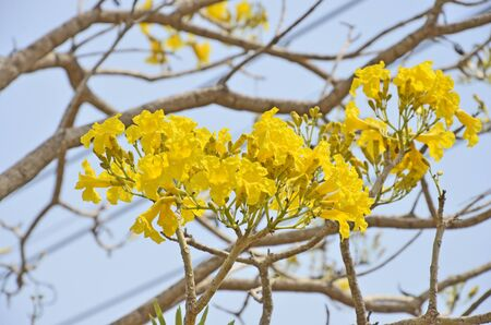 yeloow: Yelow flowers on blur branches background