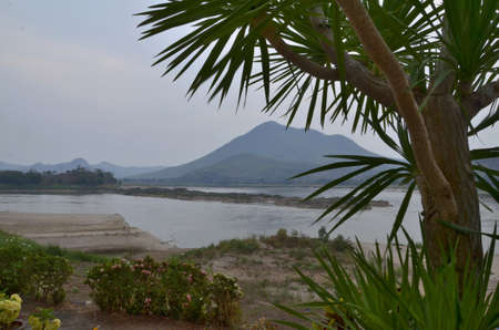 Big palm in front of Khong river view photo