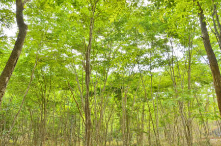 bush to grow up: Beautiful new green grow up forest