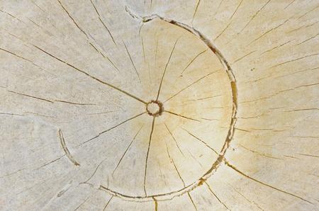 Sunlightdrop on cracked cut wood pattern texture photo