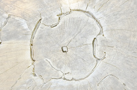 Wonderful pattern of cracked cut wood texture photo