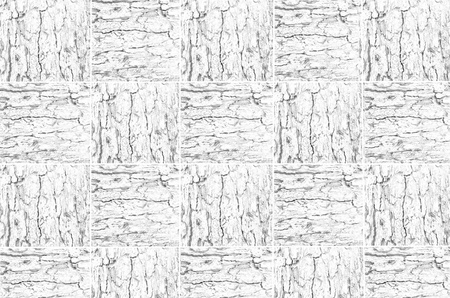 correlate: Black and white pattern of woven tree bark