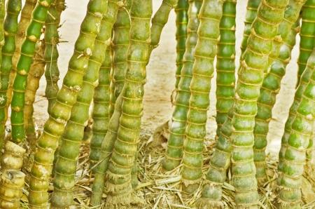 segment: Beautiful green bamboo segment Stock Photo