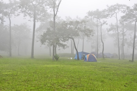 Green grass and camping tents in the fog photo