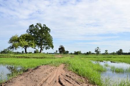tortillera: Dique de tierra y la hierba verde despu�s de llover Foto de archivo
