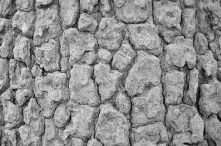 Monochrome bark pattern texture photo