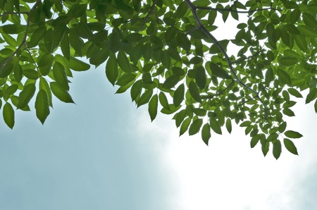 Beautiful green leaves with sky background photo