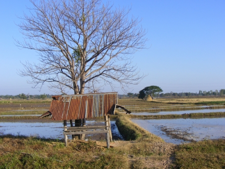 decadent: Bare tree and decadent hut in the field