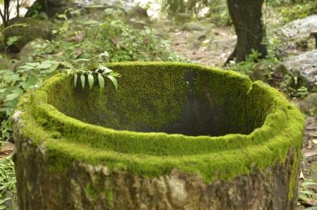 culvert: Green lichens on the old culvert