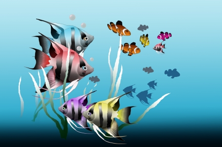 Angel fishes and cartoon fishes photo
