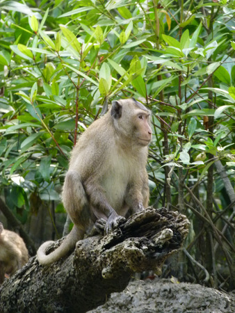misbehave: Long tailed macaques on the stump