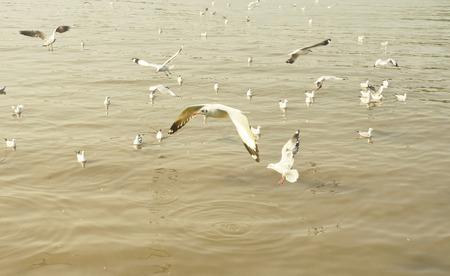 moltitudine: Moltitudine Gabbiano in mare