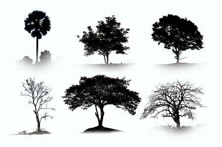Collection of black shadow of trees photo