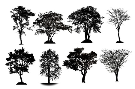 topical: Shadow of topical tree collection