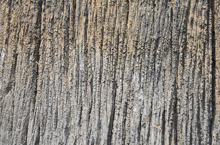 Wonderful pattern of old wood skin