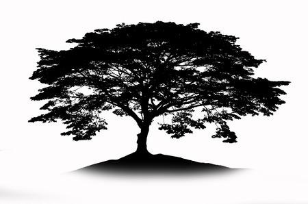 mirage: Shadow of big rain tree