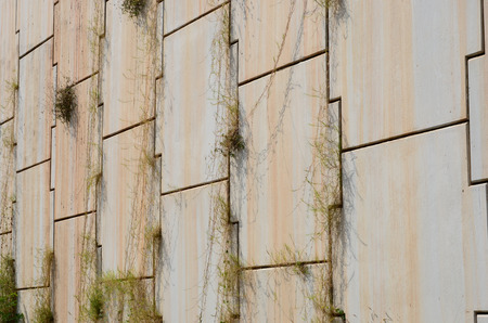 fluting: Grass on slit of concrete block Stock Photo