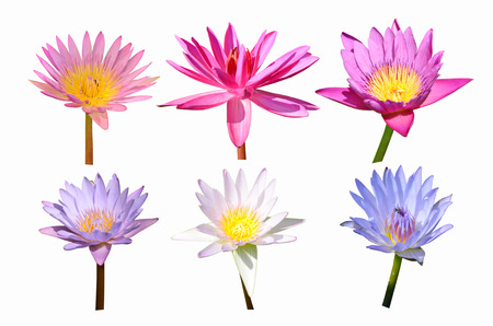 pink lily: collection of color water lily flowers Stock Photo