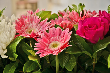 barberton daisy: Beautiful gerbera flowers with red rose