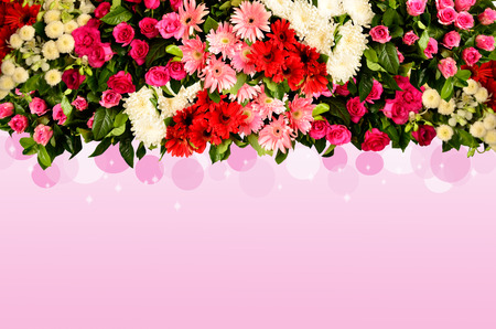 barberton daisy: Ornament flowers on pink background Stock Photo