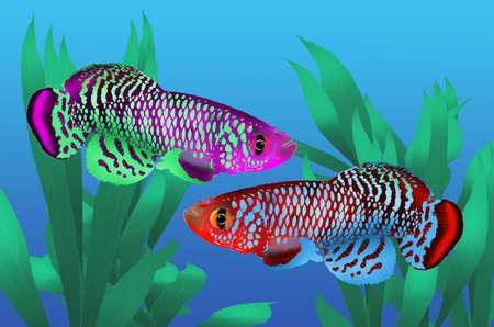 killing: Couple killing fish in fresh water