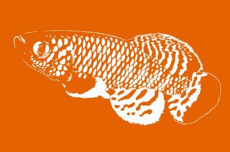 killing: Killing fish shadow on orange background